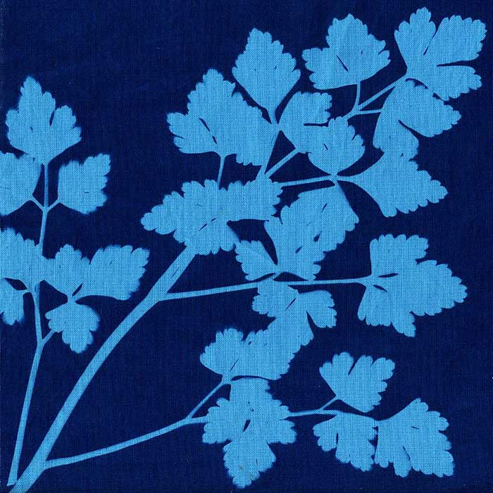 Blueprints cotton cyanotype fabric malvernweather Image collections