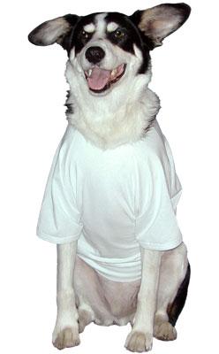 Personalized Custom Security System Bodyguard Dog T-Shirt Baseball Shirt Typography Dog Lovers 17 Colors 10 Sizes Dog Raglan or Tank